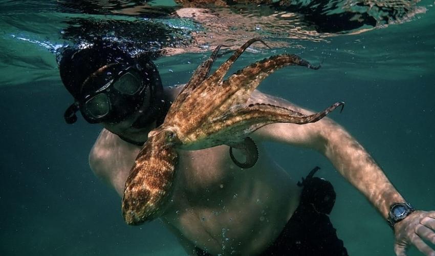 My Octopus Teacher: «Το σπίτι μας, είναι αυτός εδώ ο πλανήτης»