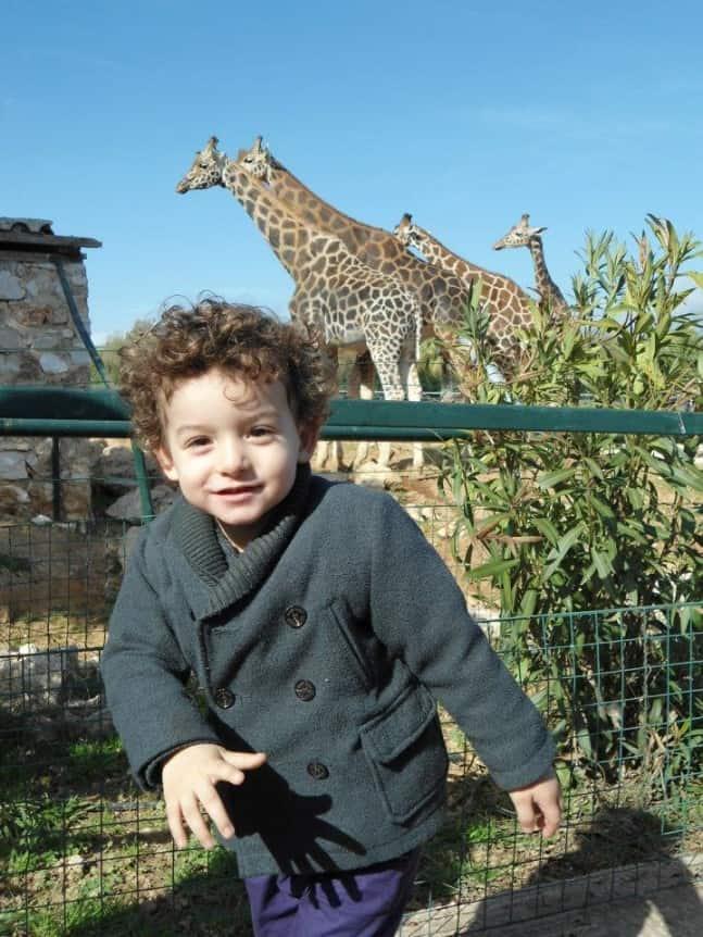 5.-zoo-647x862